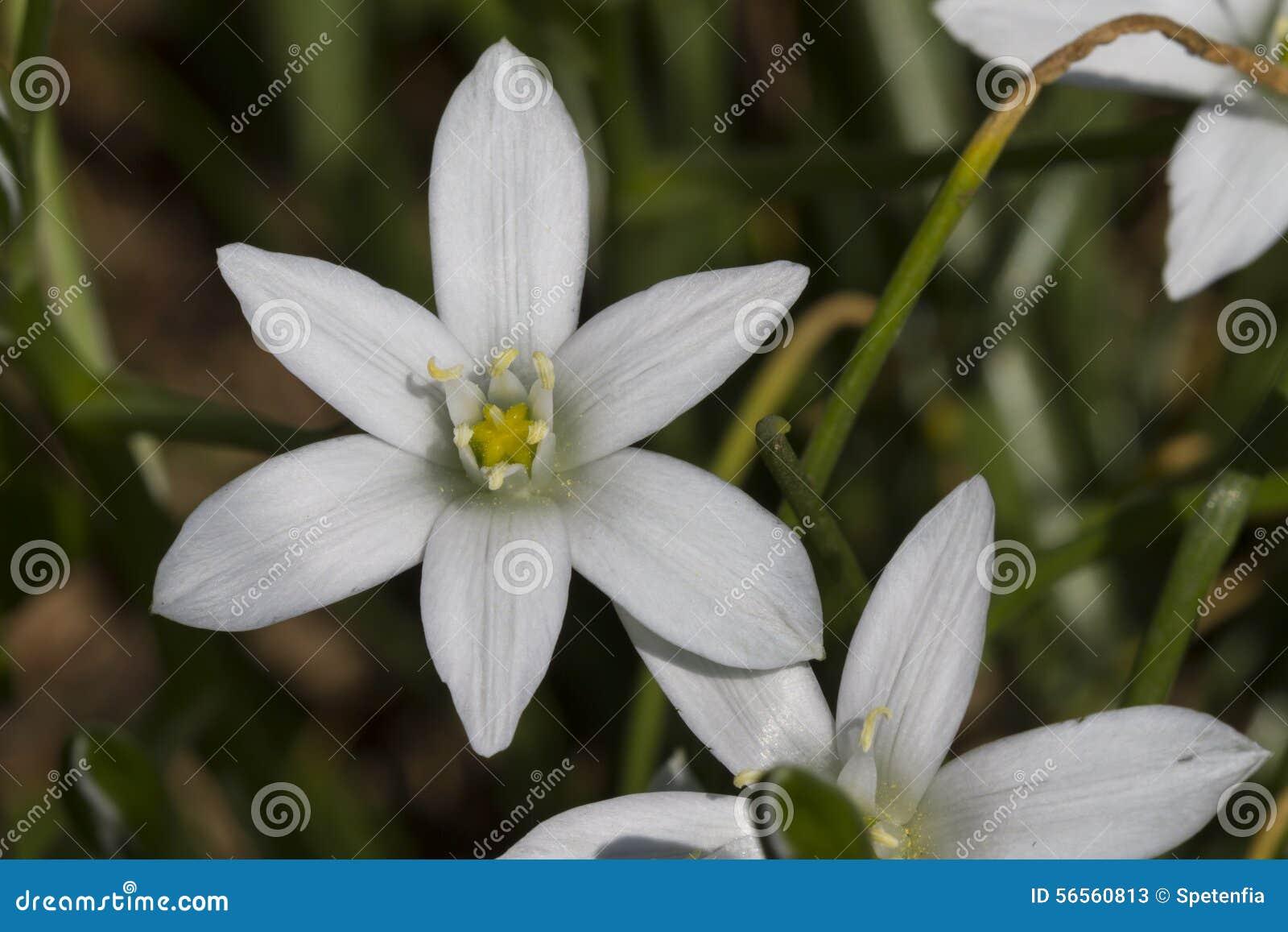 Download Λουλούδι στον κήπο στοκ εικόνα. εικόνα από πέταλο, κηπουρική - 56560813