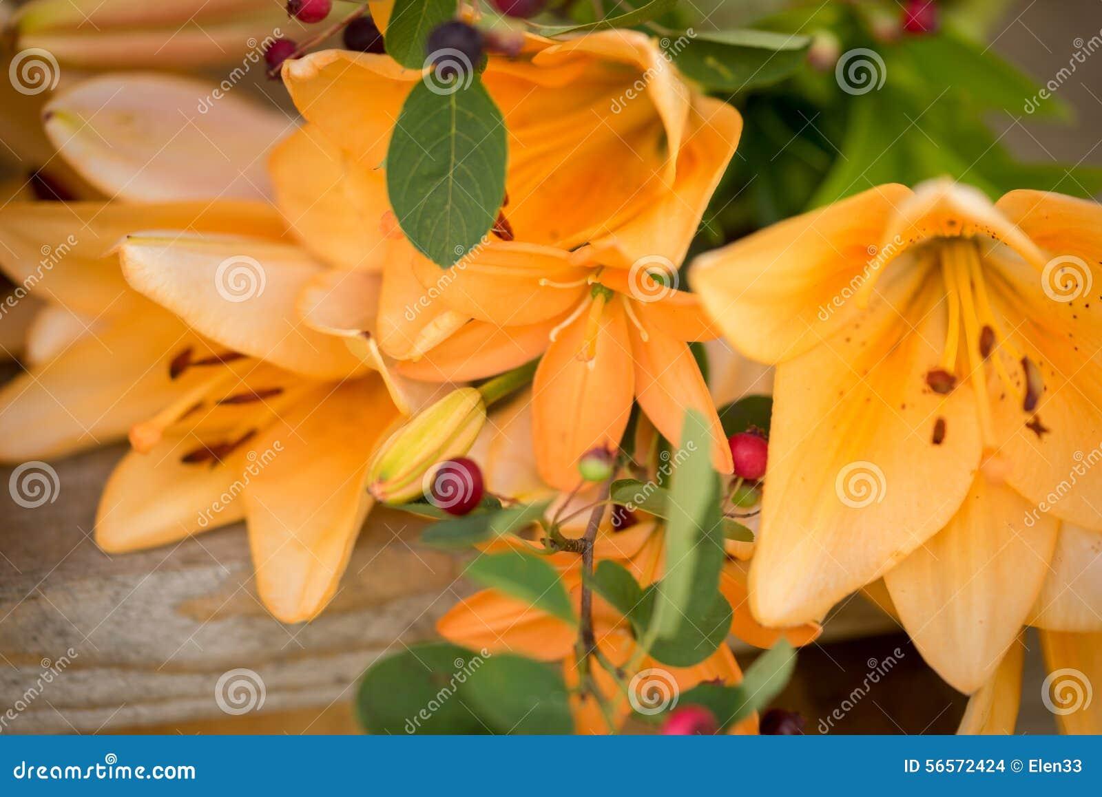 Download Λουλούδι στοκ εικόνες. εικόνα από κόκκινος, φυτό, ασιατικοί - 56572424