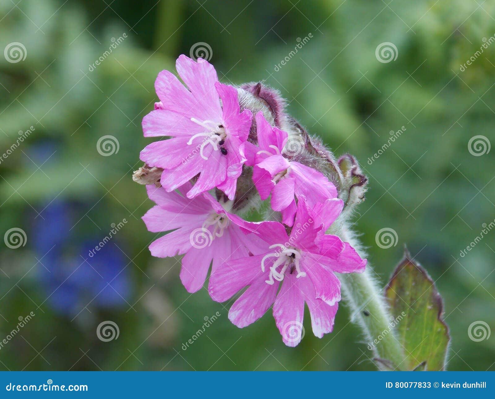 Λουλούδι;
