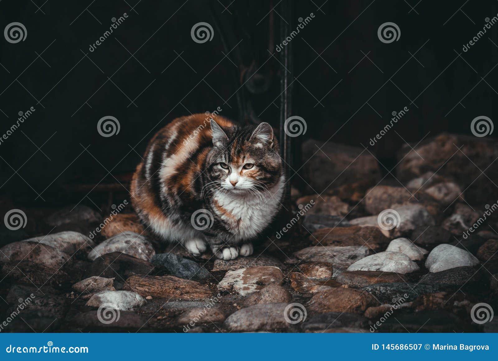 Λυπημένη γάτα σε ένα μαύρο υπόβαθρο Αναμονή τον ιδιοκτήτη Όμορφη ζωηρόχρωμη γάτα στις ζωηρόχρωμες πέτρες Γάτες οδών