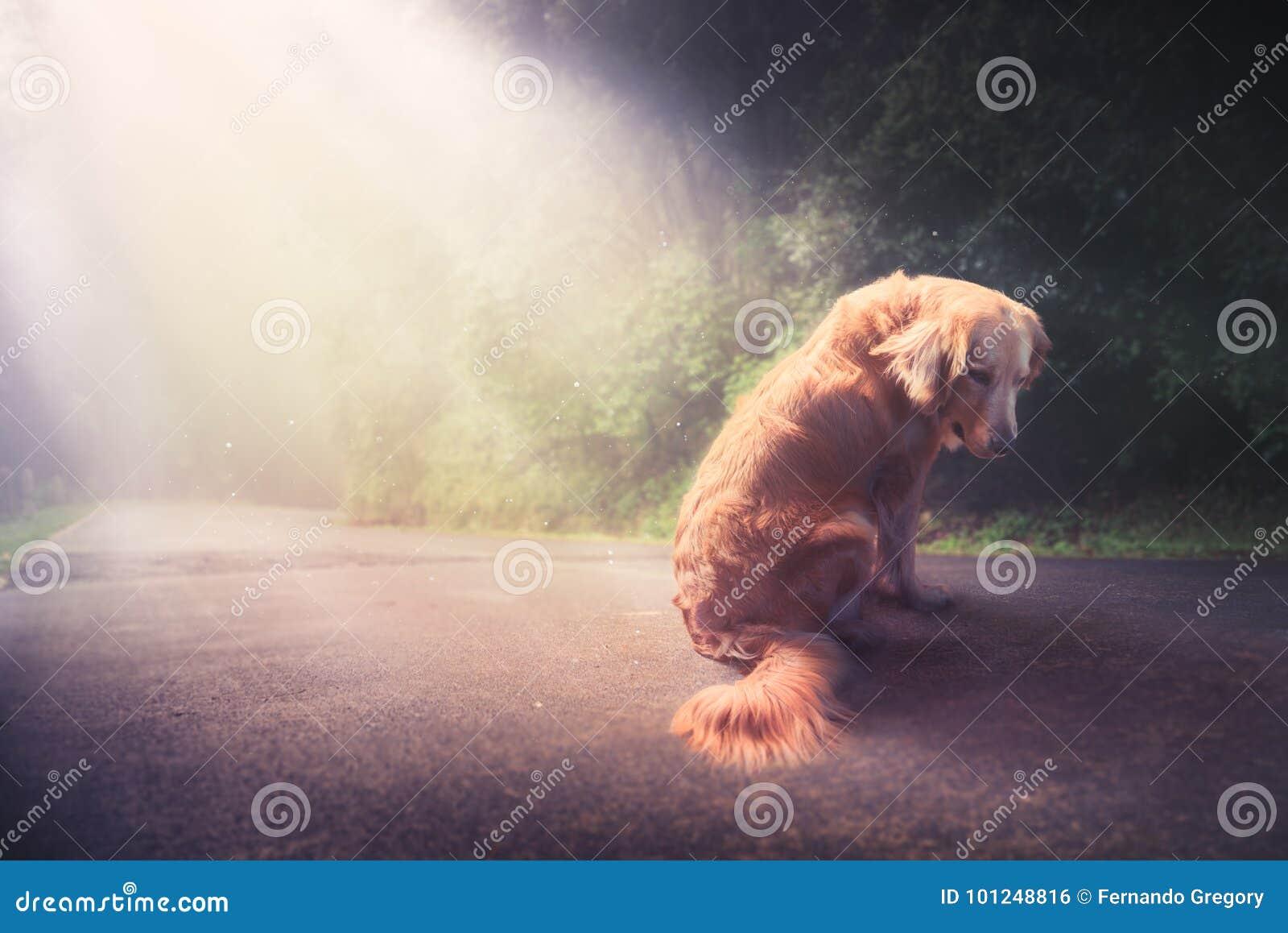 Λυπημένο, εγκαταλειμμένο σκυλί στη μέση της αντίθεσης του οδικού /high imag