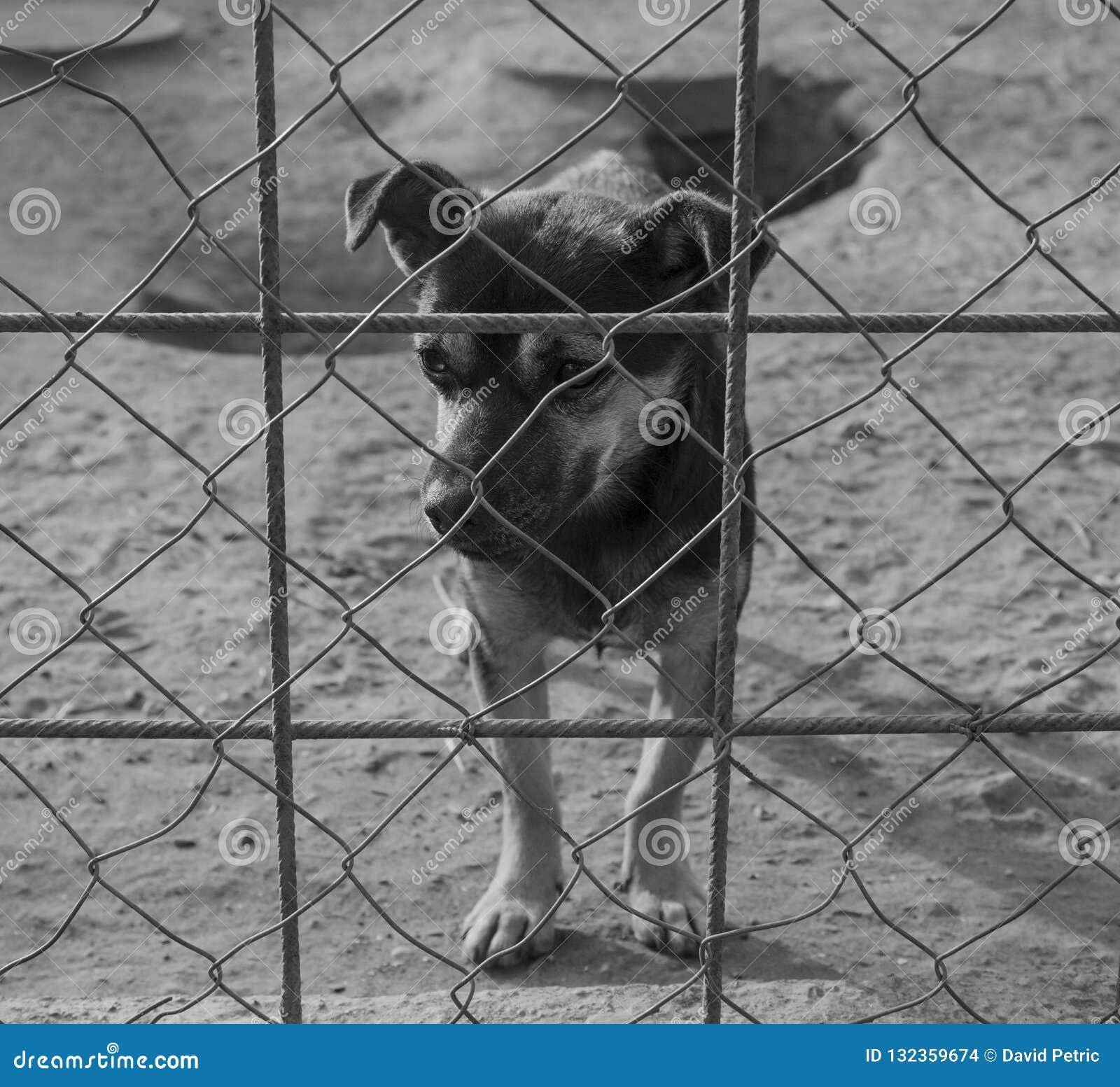 Λυπημένο κουτάβι σε ένα καταφύγιο