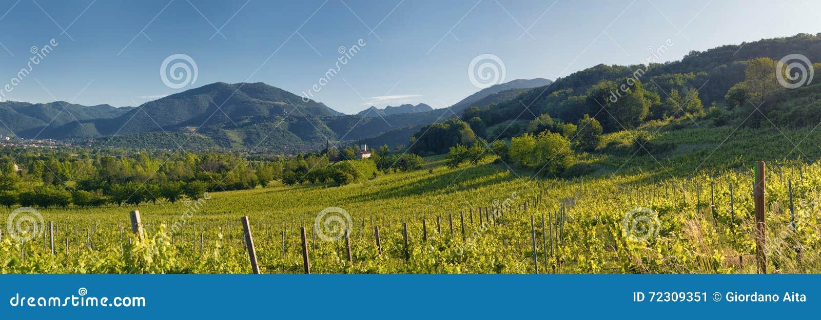 Λόφοι και wineyards