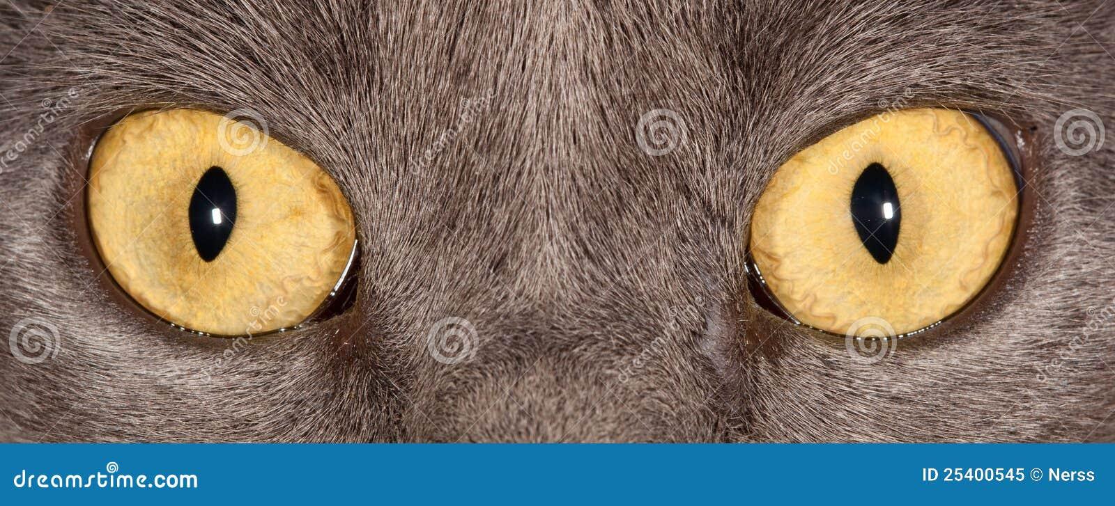 μάτια γατών