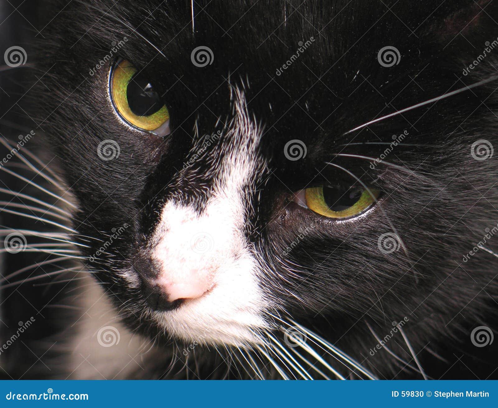 Download μάτια γατών s στοκ εικόνες. εικόνα από γάτα, αιλουροειδής - 59830