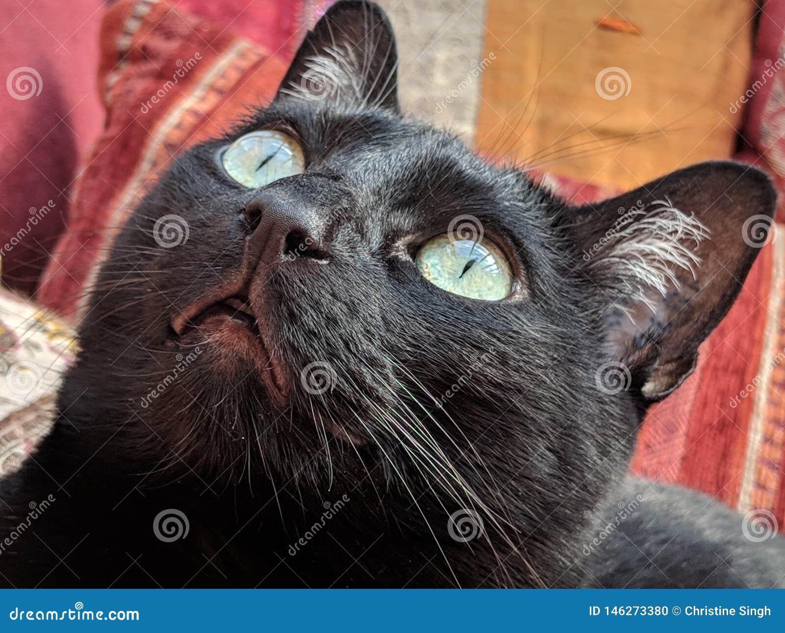 Μάτια της λίγο μαύρης γάτας