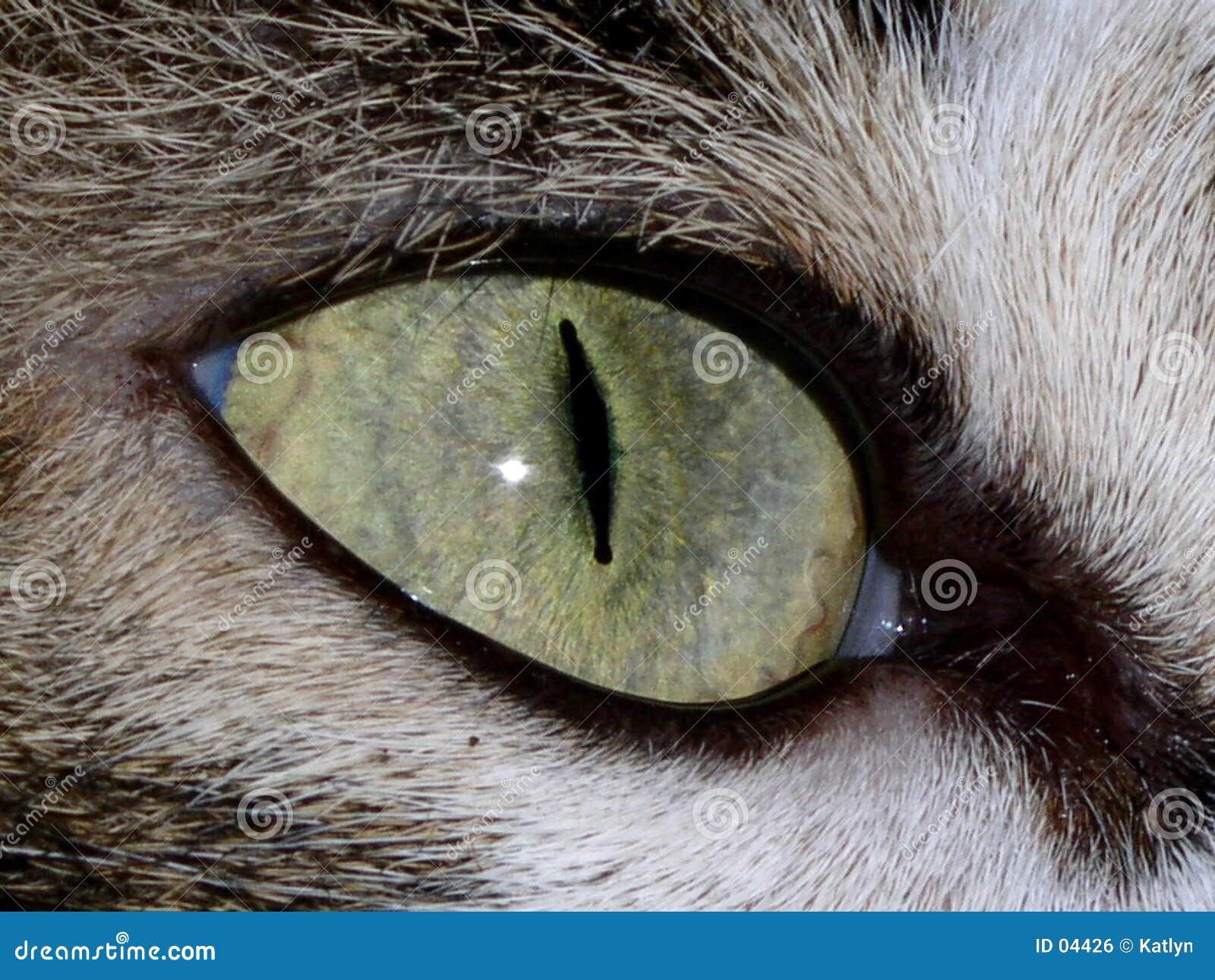 μάτι γατών