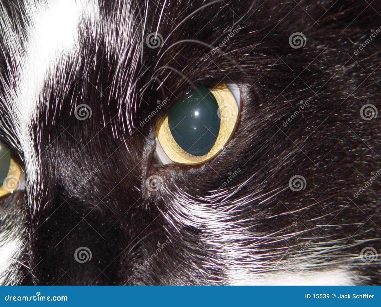 μάτι γατών s