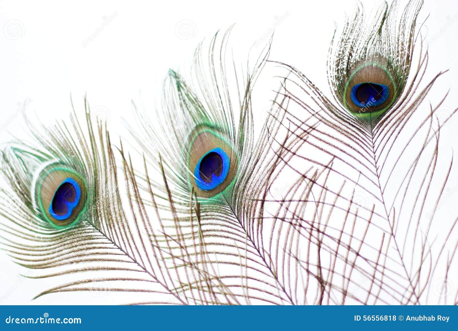 Download Μάτι φτερών Peacock στοκ εικόνες. εικόνα από κατσαρωμένος - 56556818