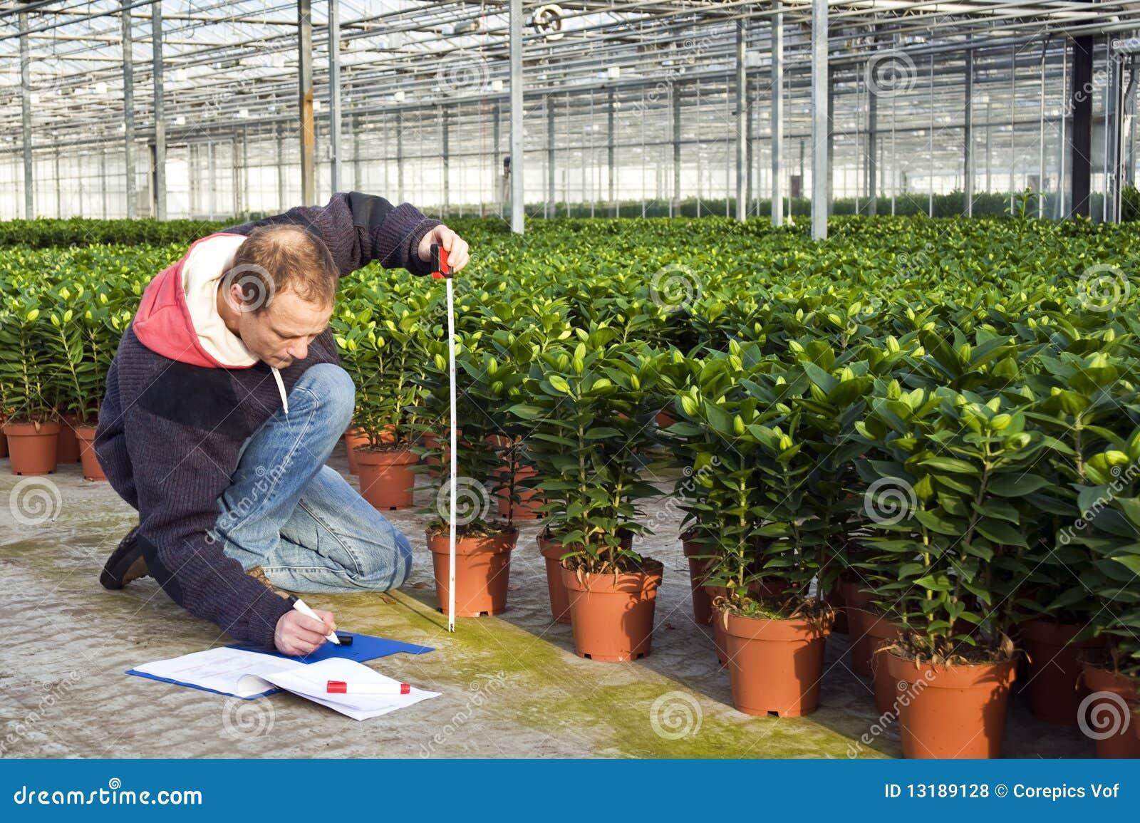 Μέτρηση του ύψους των φυτών θερμοκηπίων