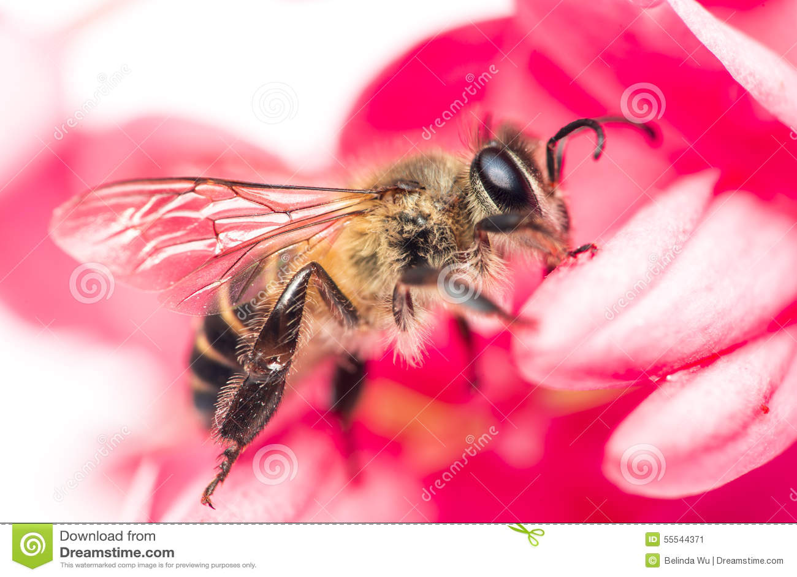 Μέλισσα στο λουλούδι
