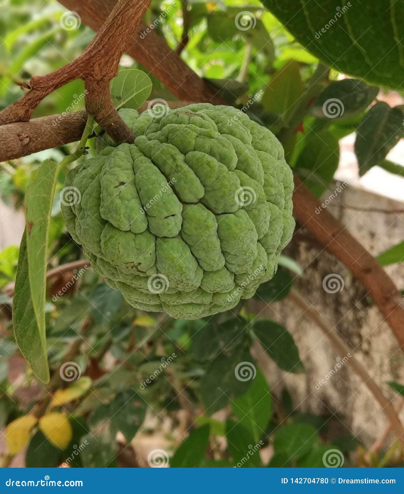 Μήλο κρέμας στο πράσινο υπόβαθρο