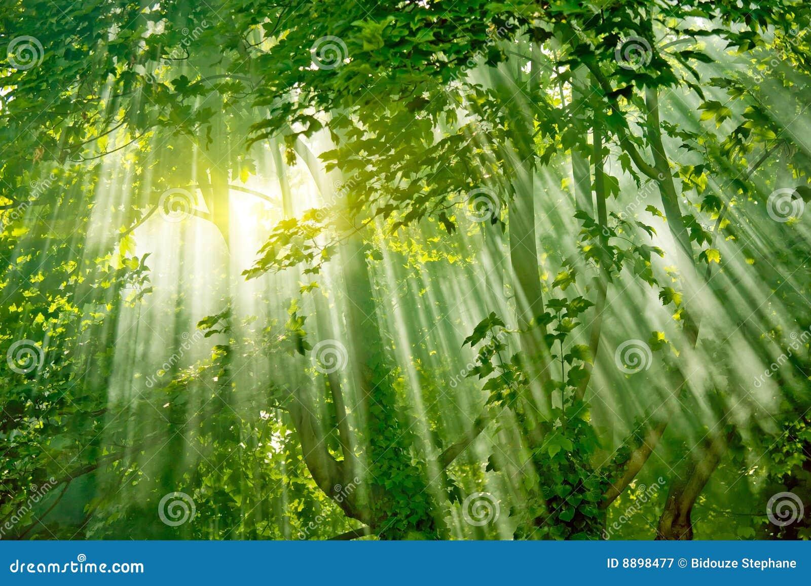 μαγικά δέντρα sunlights