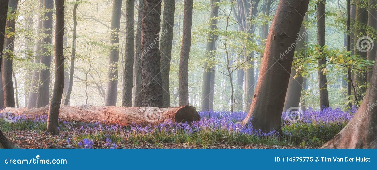 Μαγικό δάσος bluebell