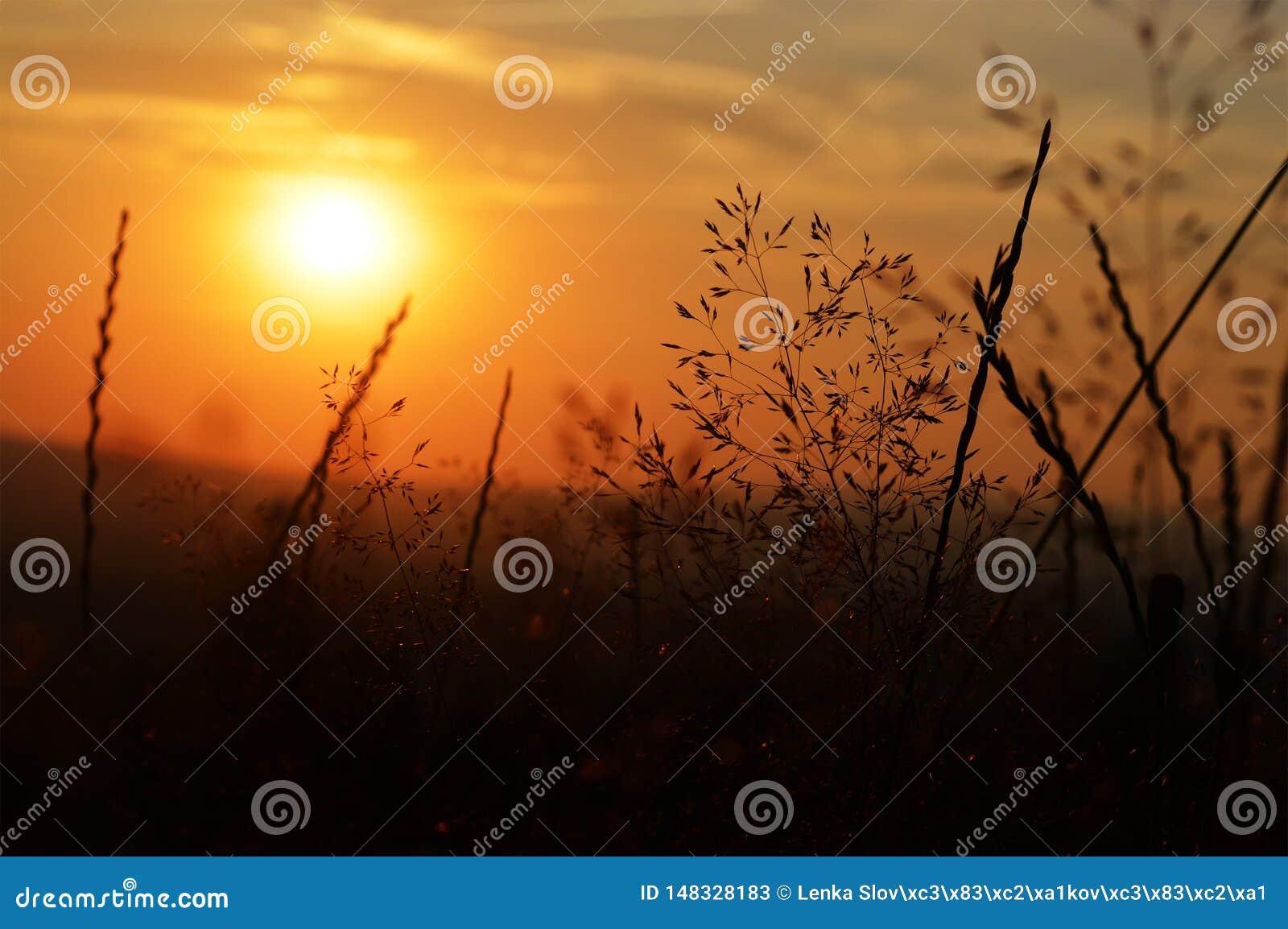 Μαγικό ηλιοβασίλεμα βραδιού στη φύση