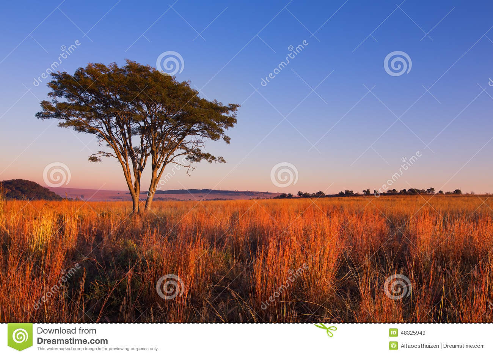 Μαγικό ηλιοβασίλεμα στην Αφρική με ένα απομονωμένο δέντρο στο λόφο και το λεπτό σύννεφο