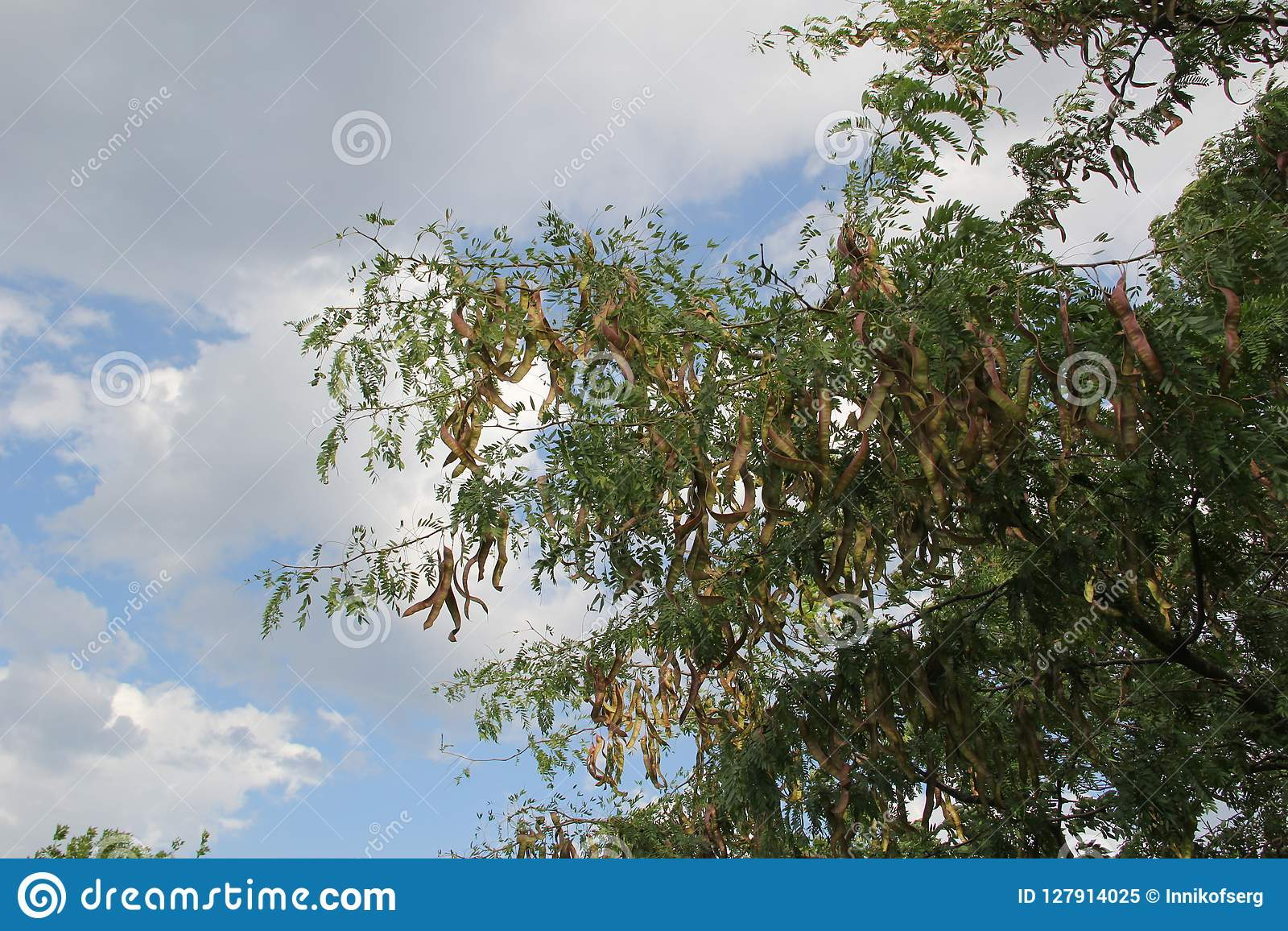Μακροεντολή Τα σκουλαρίκια κρεμούν στο δέντρο