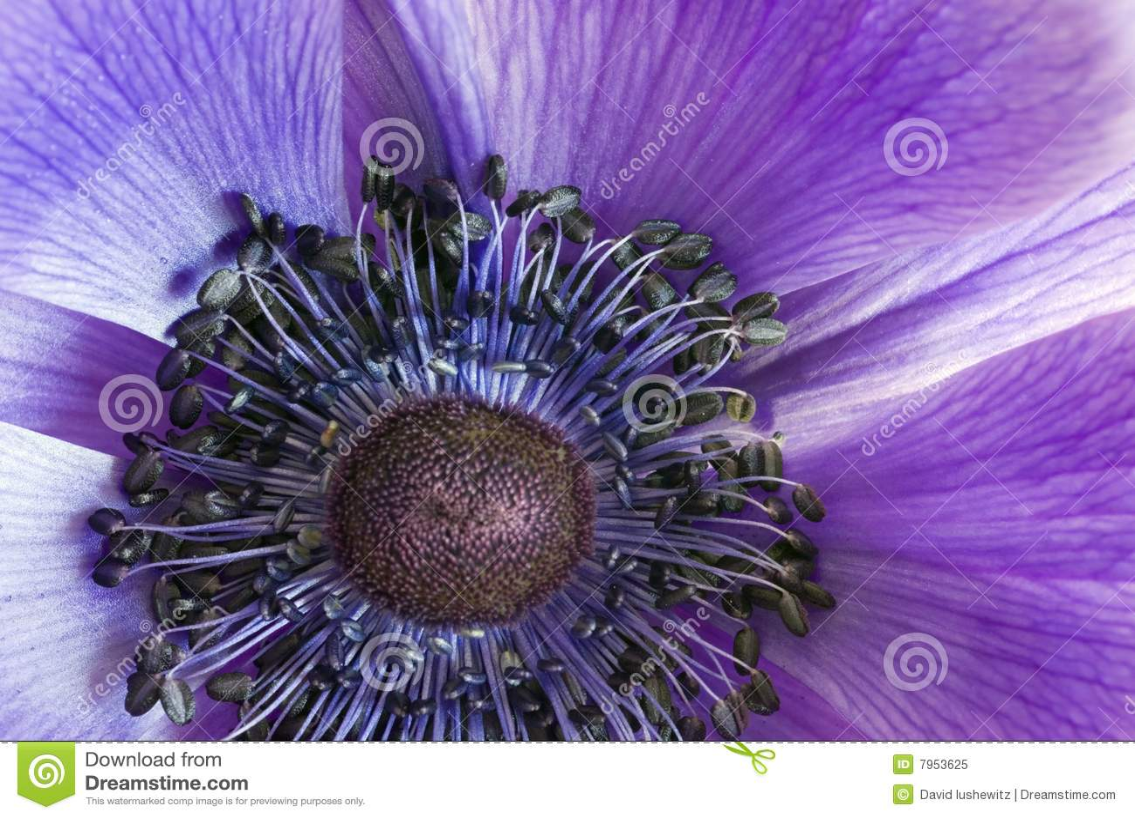 μακροεντολή anemone