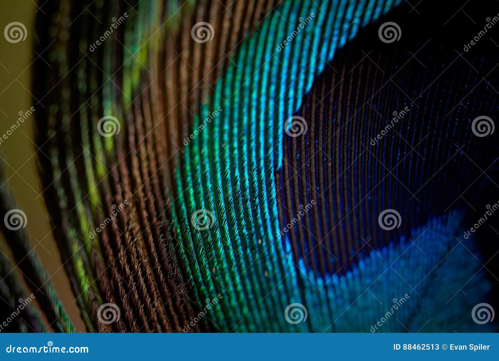 Μακροεντολή φτερών Peacock