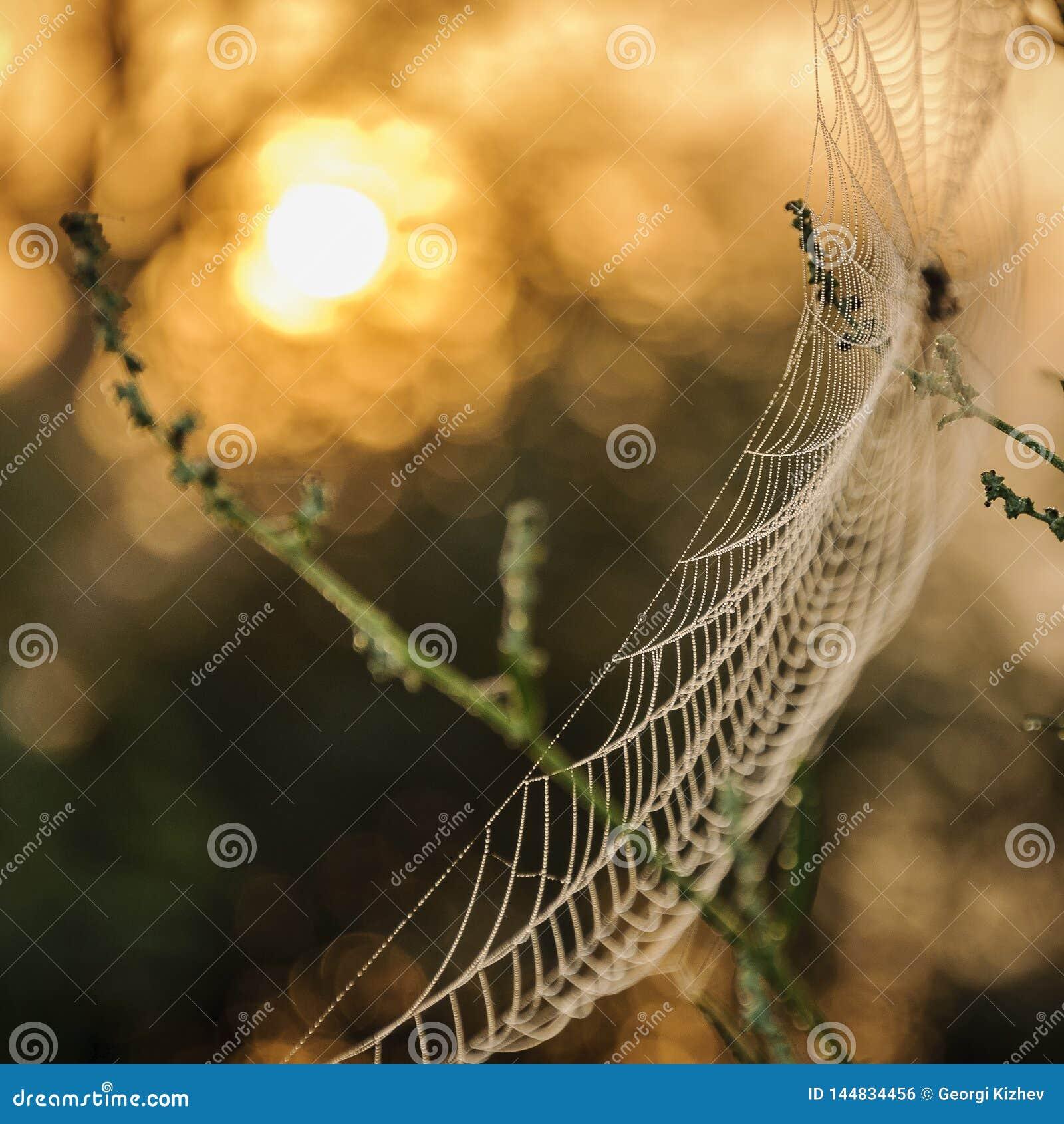 Μακρο αράχνη καθαρή