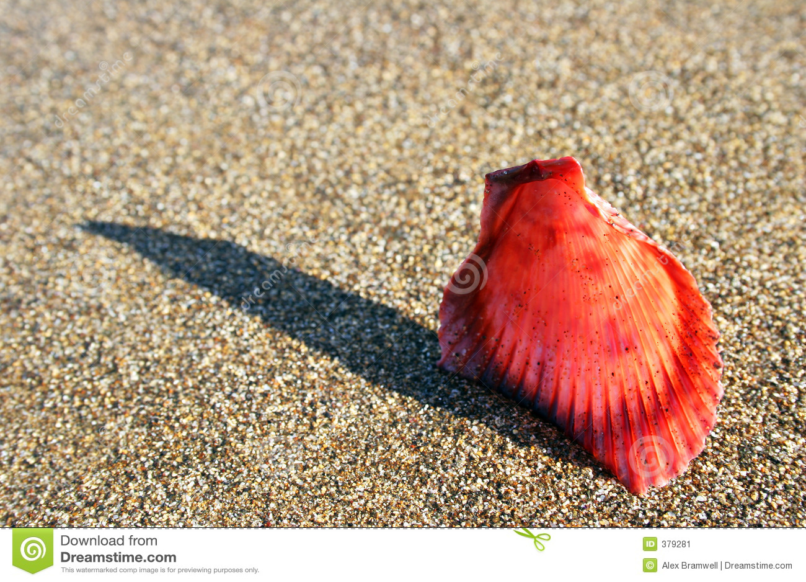 μακρο θαλασσινό κοχύλι