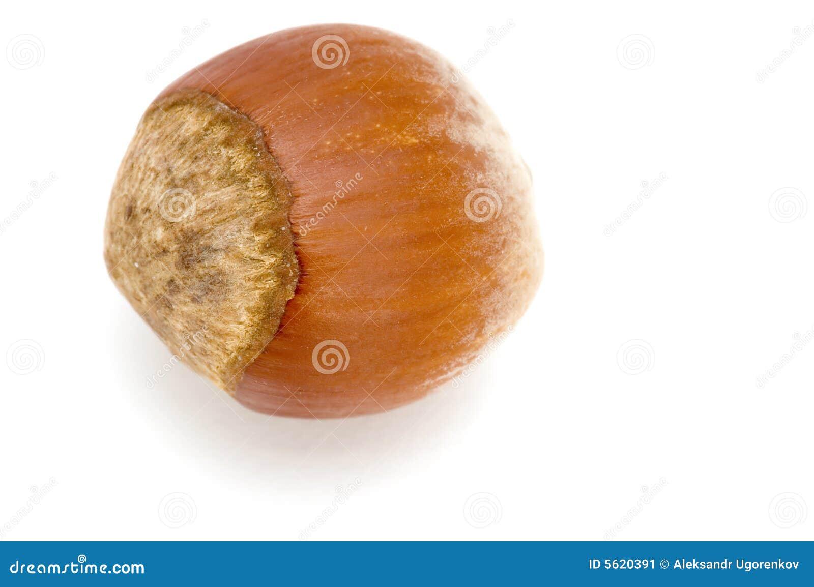 μακρο καρύδι φουντουκιών