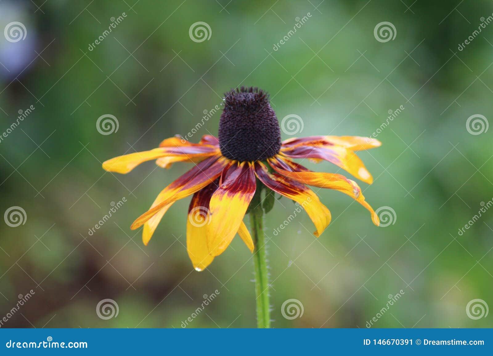 Μακρο λουλούδι από τις Αζόρες