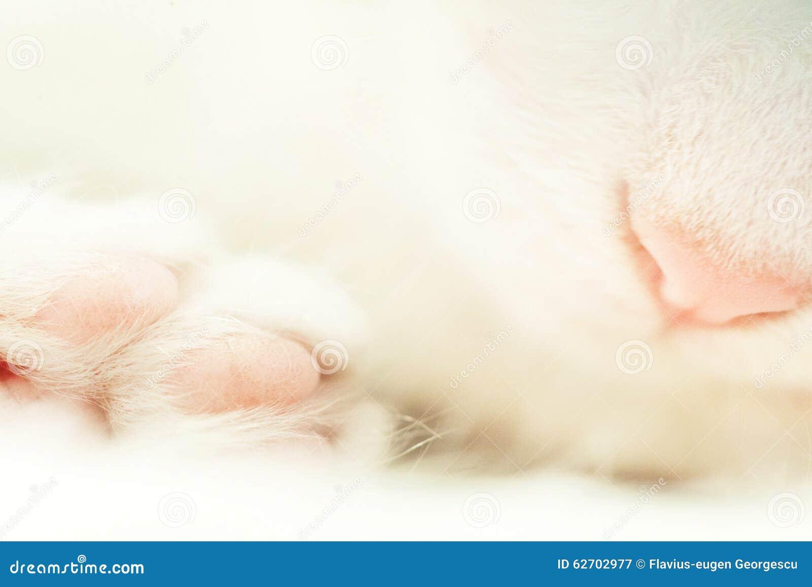 Μακρο πυροβολισμός της ρόδινης μύτης και του γούνινου ποδιού στην άσπρη γάτα ύπνου