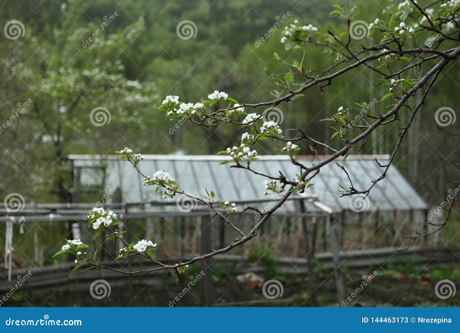 Μαλακά πράσινα φύλλα