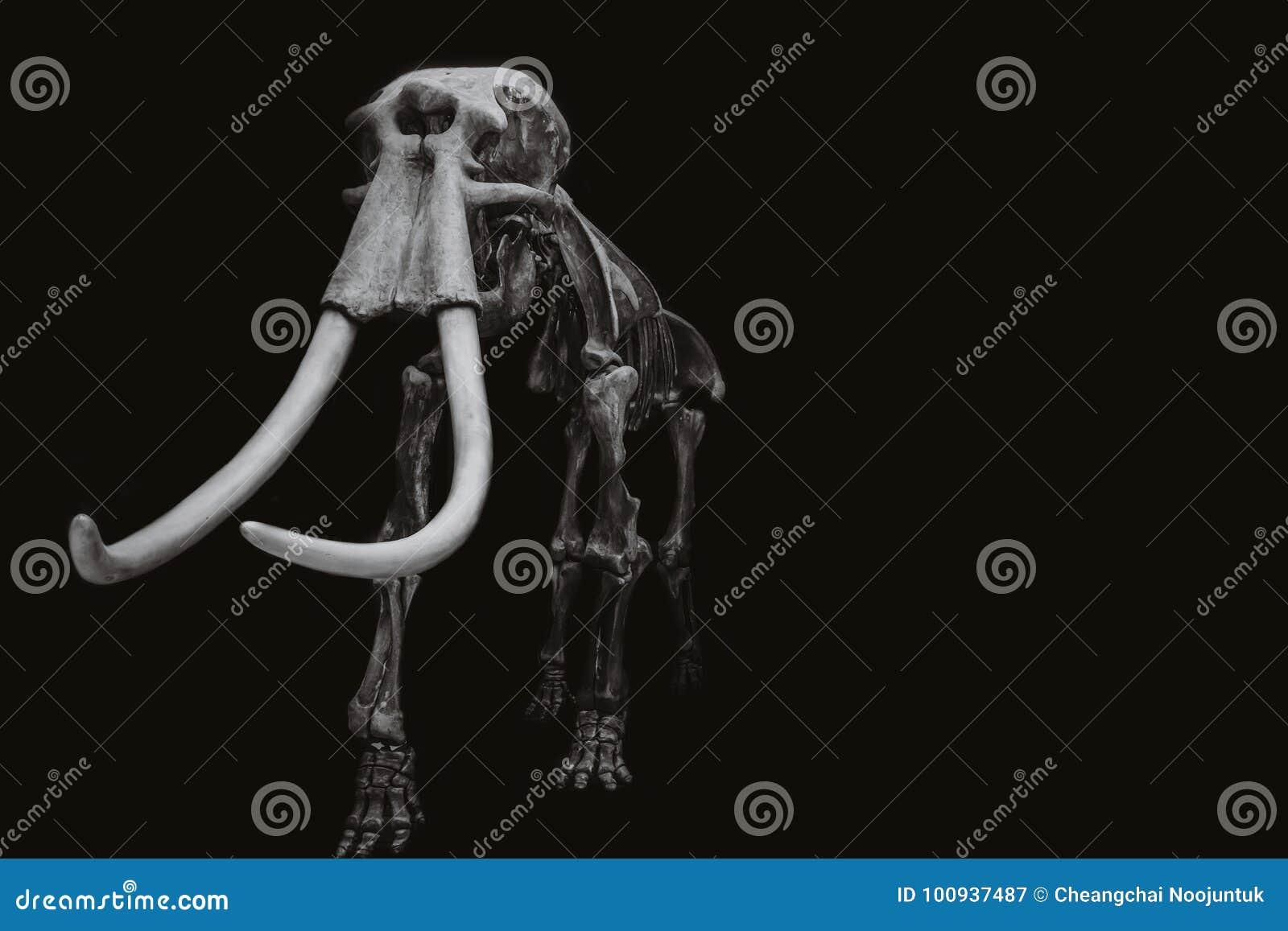 Μαμμούθ σκελετός