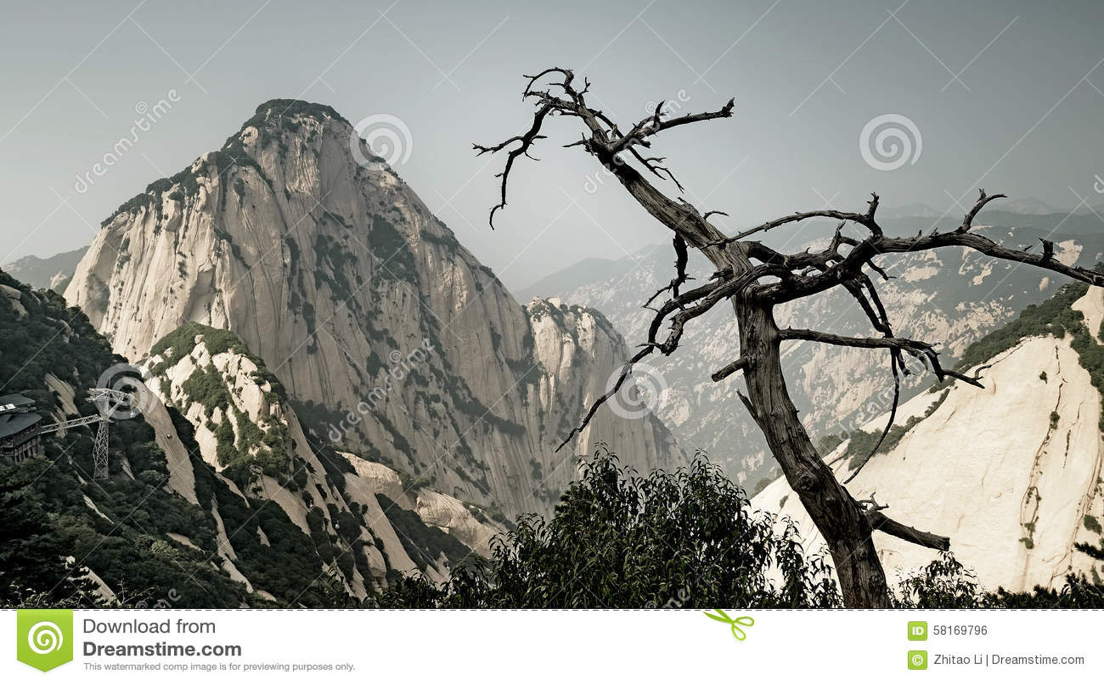 Μαραμένα δέντρο και βουνό