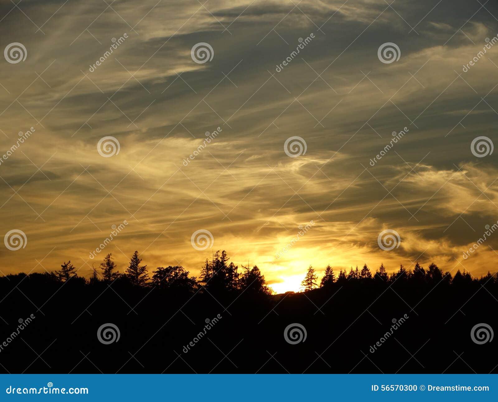 Download Μαρμάρινο σχέδιο ανατολής στοκ εικόνες. εικόνα από evergreens - 56570300