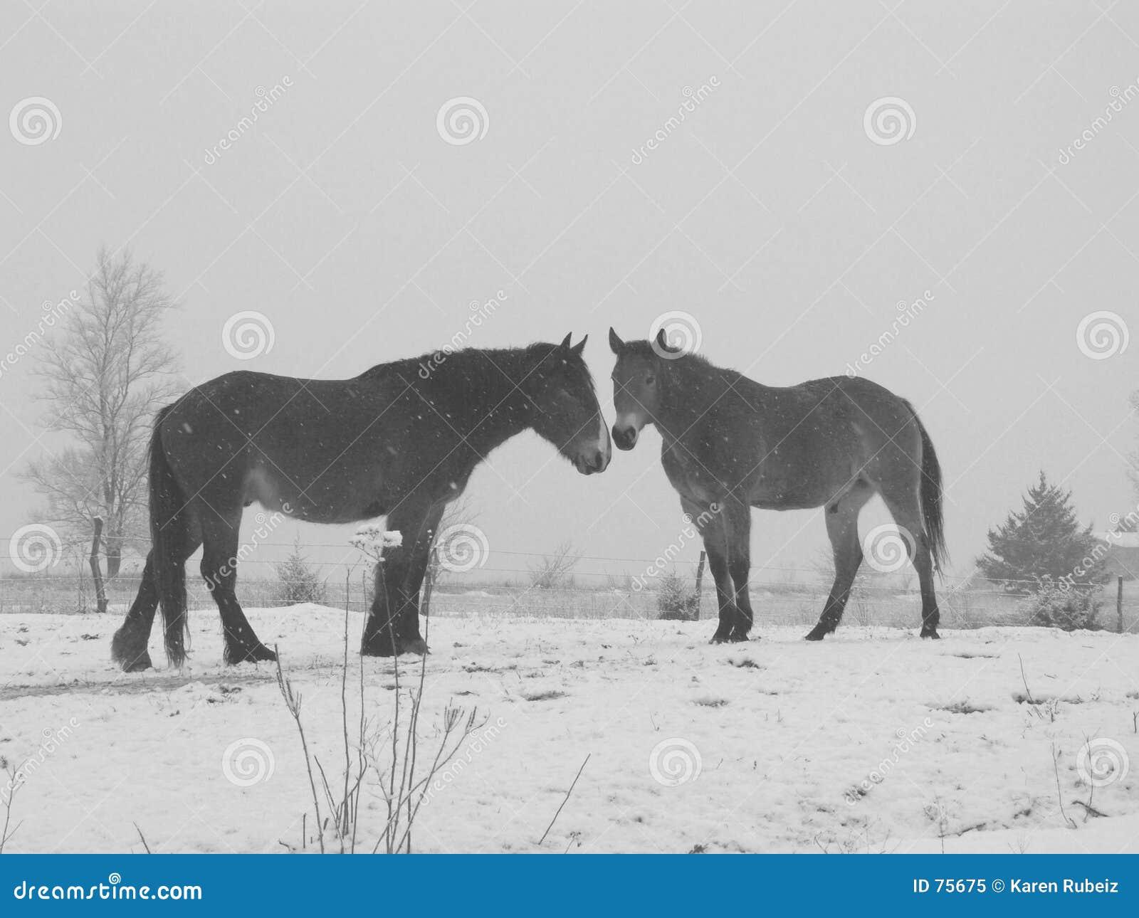 μαύρα άλογα λευκά σαν το &ch