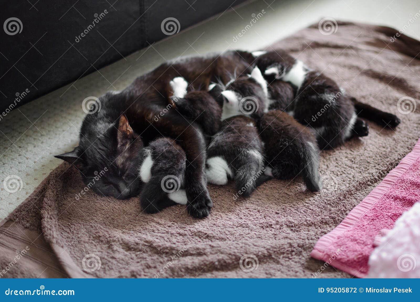 Μαύρα γάτα και γατάκια
