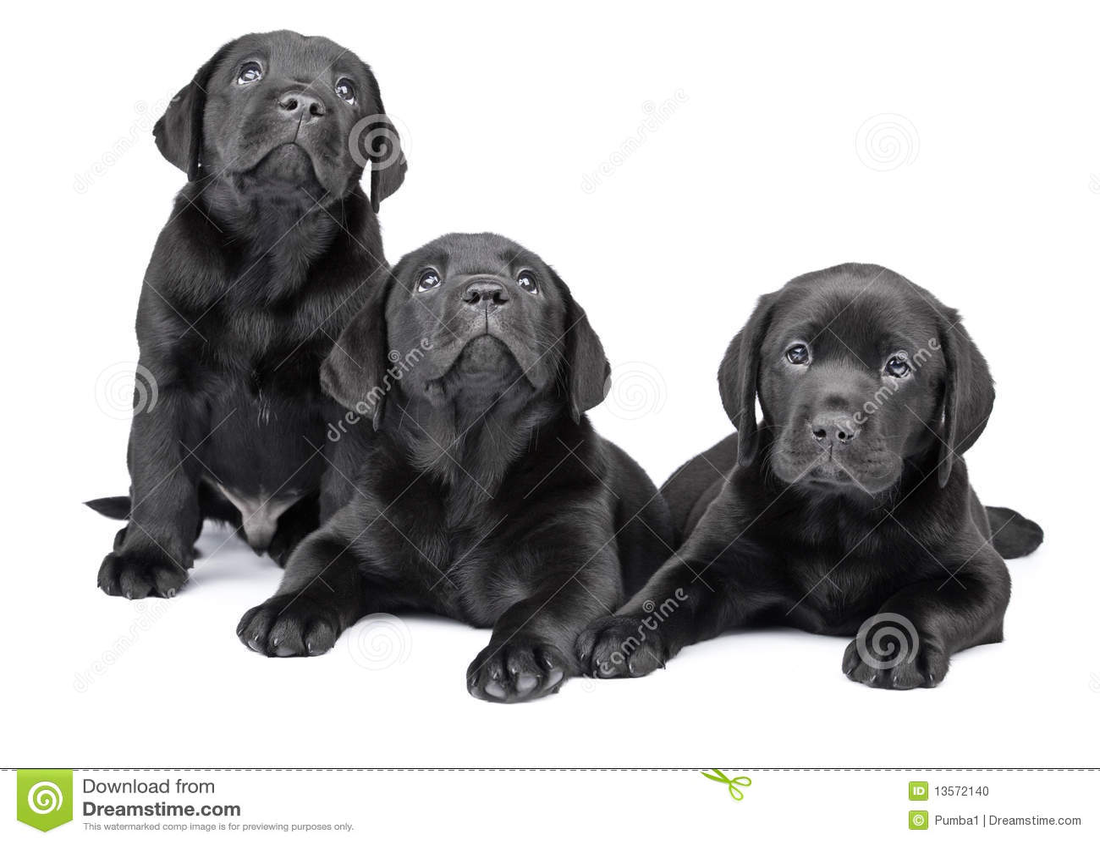 μαύρα κουτάβια τρία του Λ&al