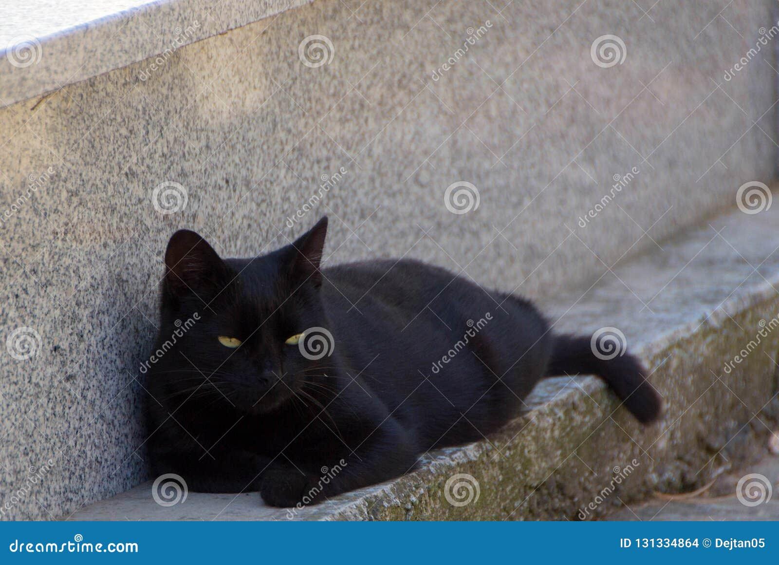 μαύρα μάτια γατών κίτρινα