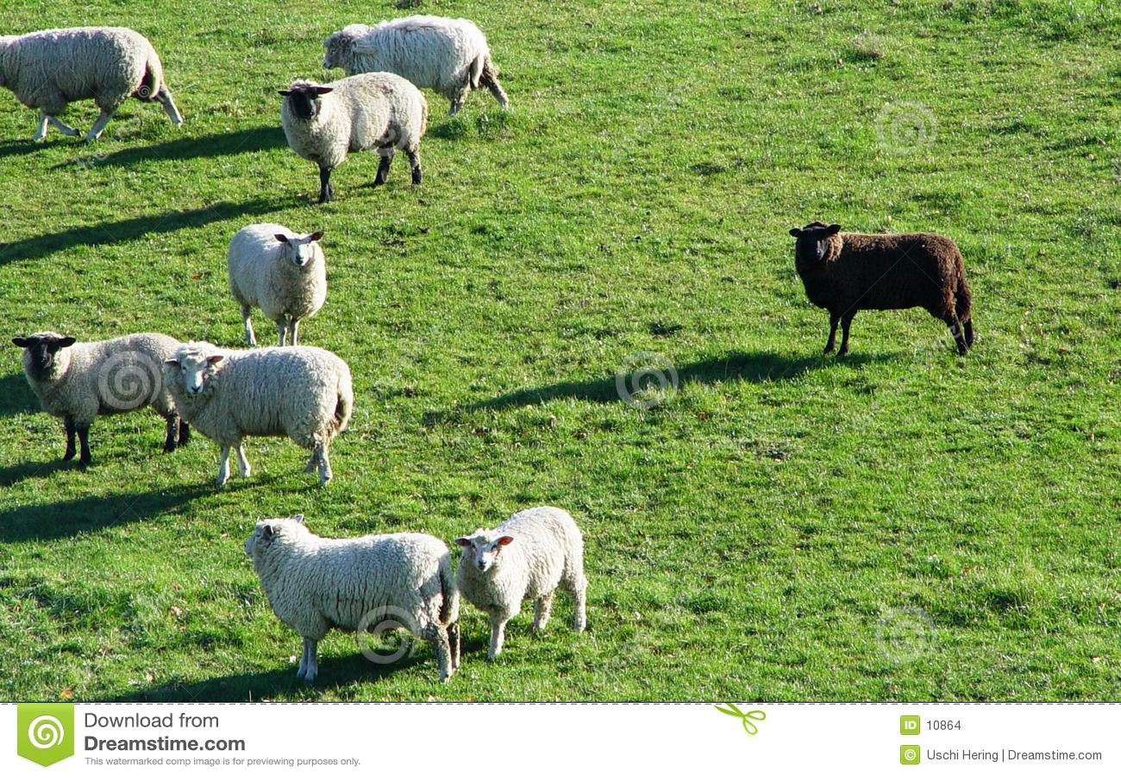 μαύρα πρόβατα