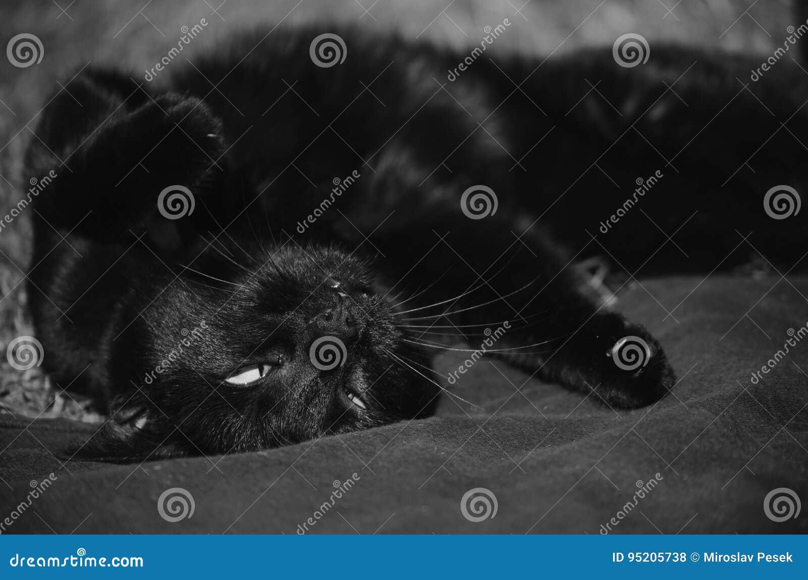 Μαύρη άνω πλευρά γατών - κάτω