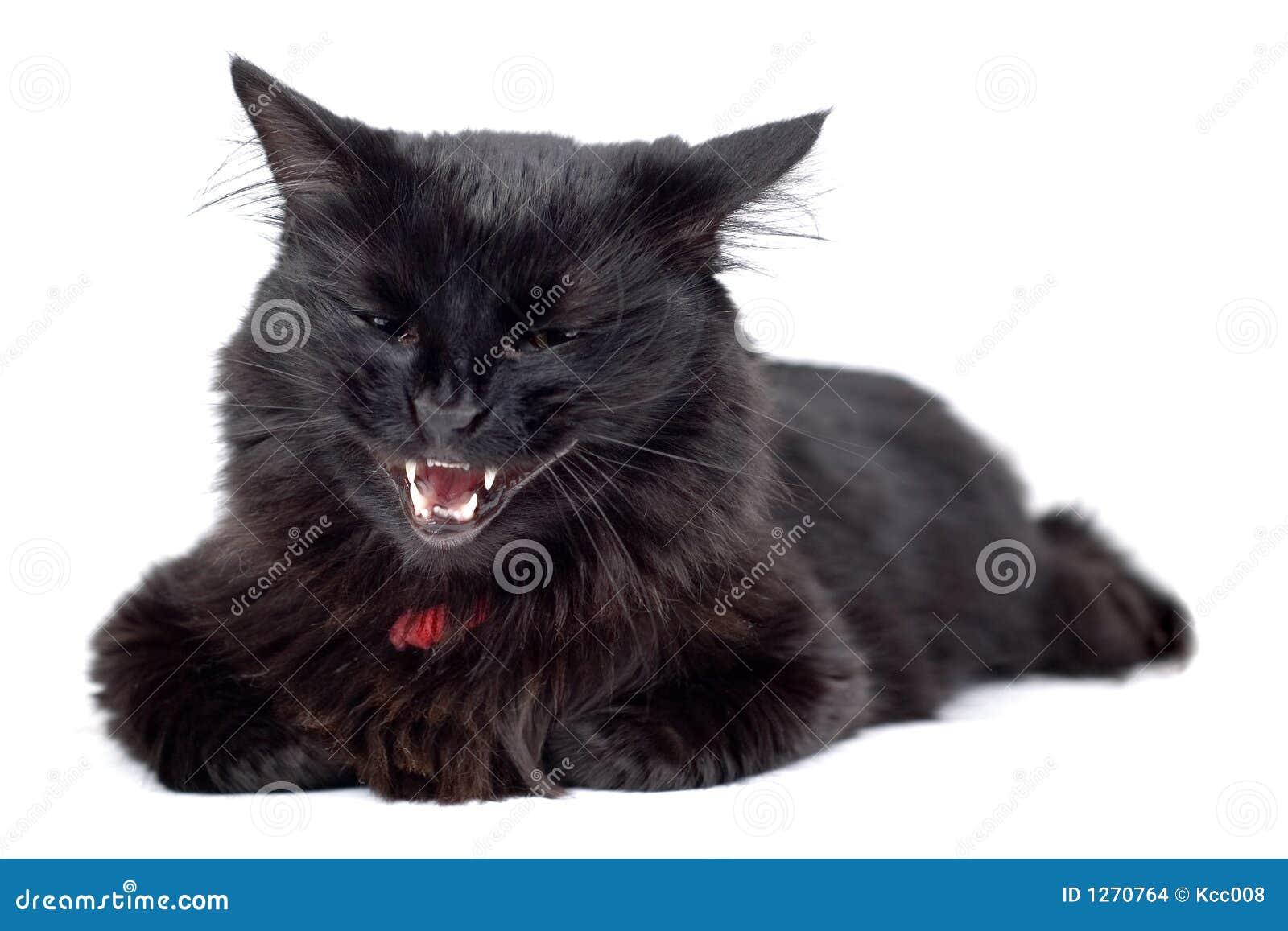 μαύρη γάταη