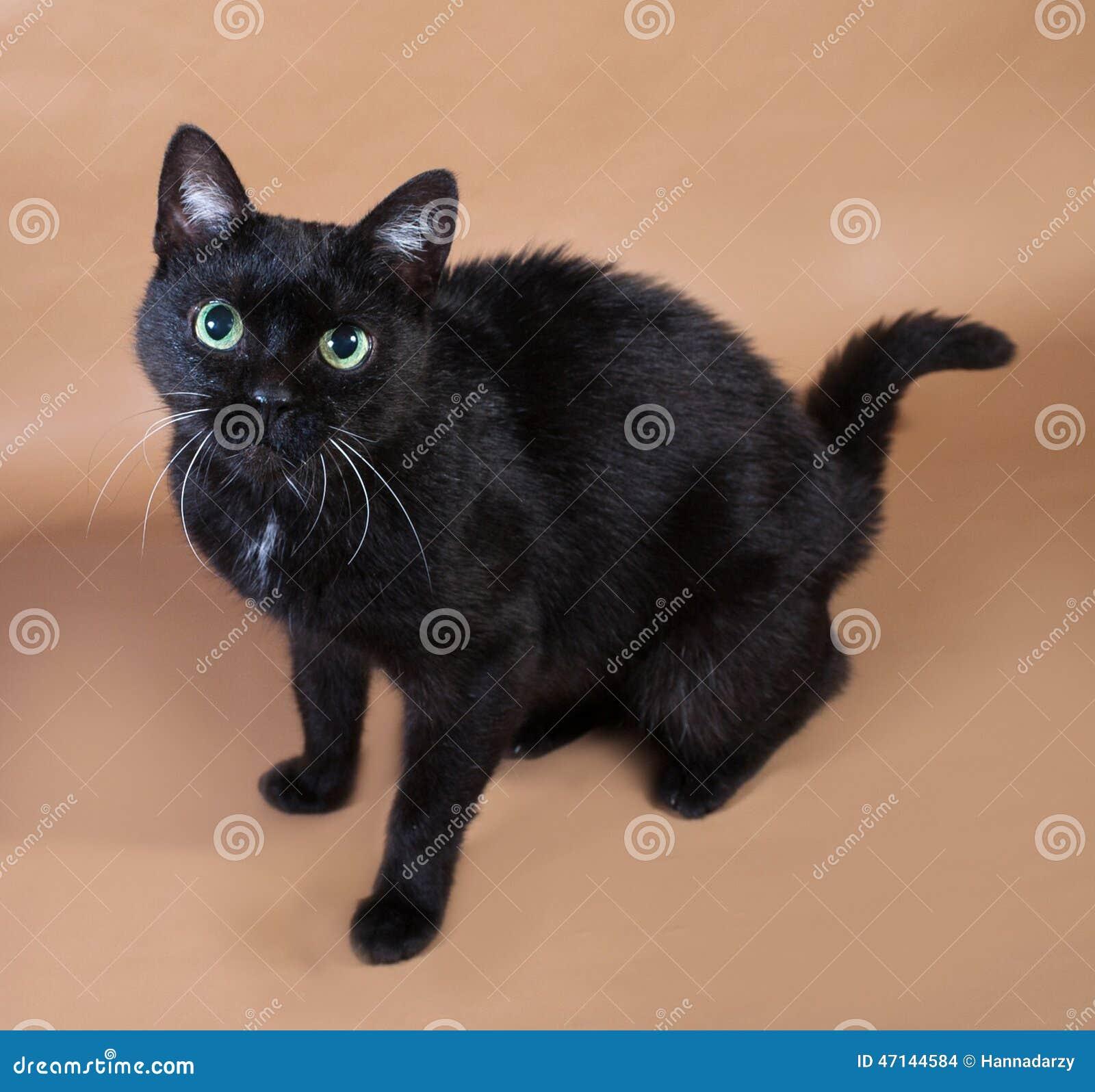 8f1ea0859f35 Μαύρη γάτα με τα πράσινα μάτια που κάθονται σε καφετή Στοκ Εικόνες ...