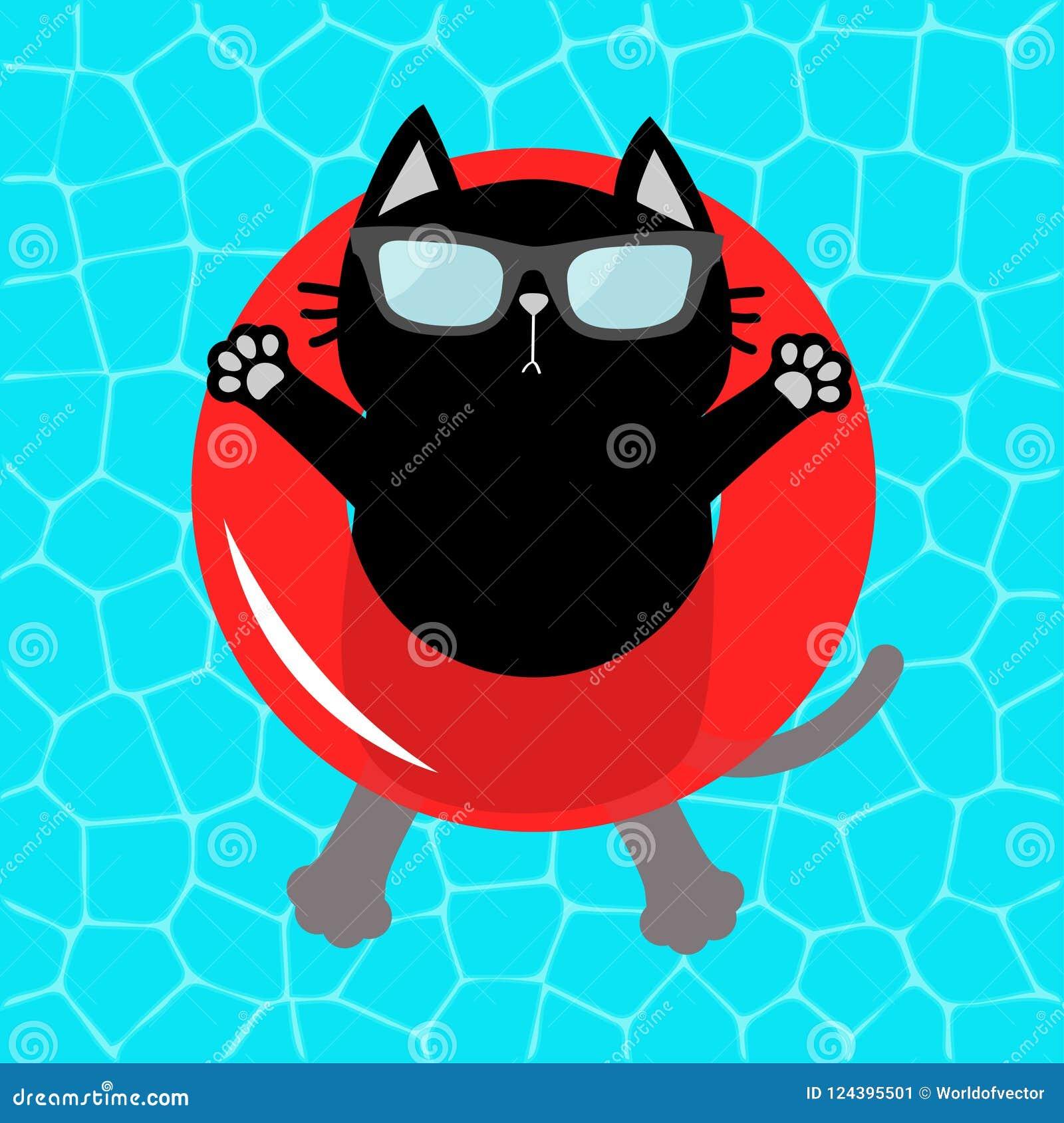 Μαύρη γάτα που επιπλέει στον κόκκινο κύκλο νερού επιπλεόντων σωμάτων λιμνών Τοπ άποψη αέρα Γειά σου καλοκαίρι Νερό πισινών Γυαλιά