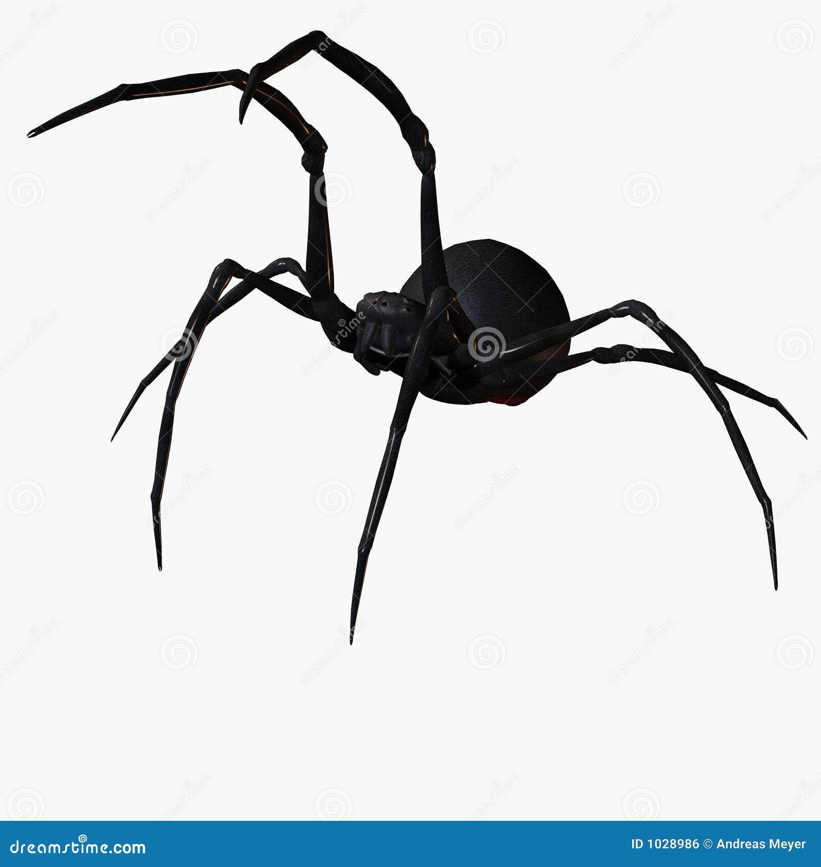 μαύρη χήρα αραχνών