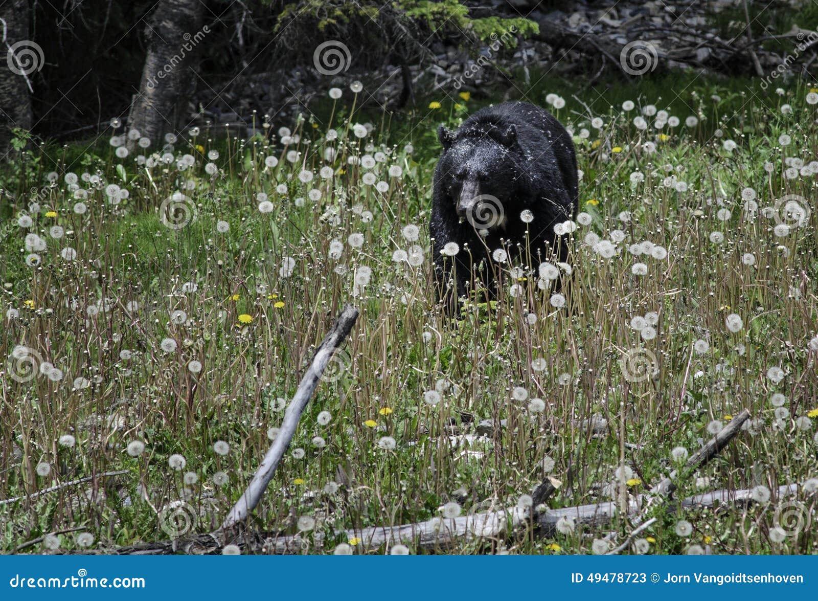Μαύρος αντέξτε τρώει τα λουλούδια