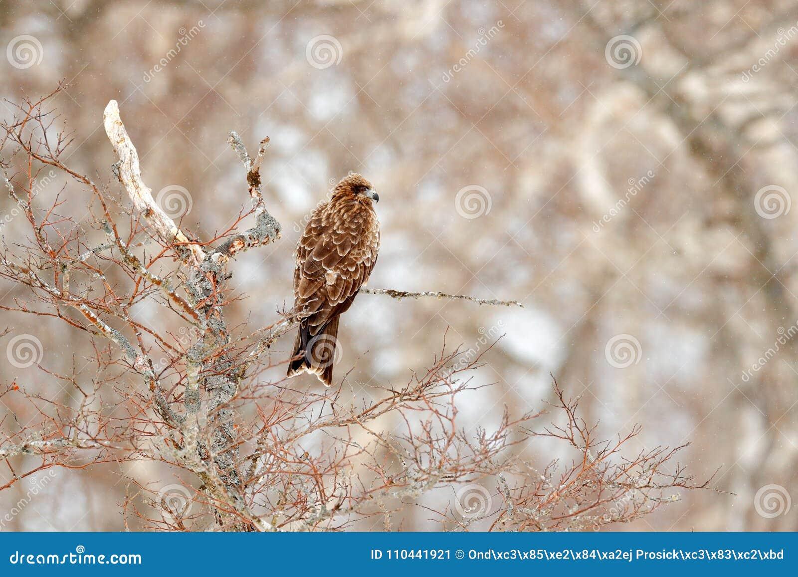 δωρεάν μεγάλο πουλί σωλήνεςμουνί χύσιμο