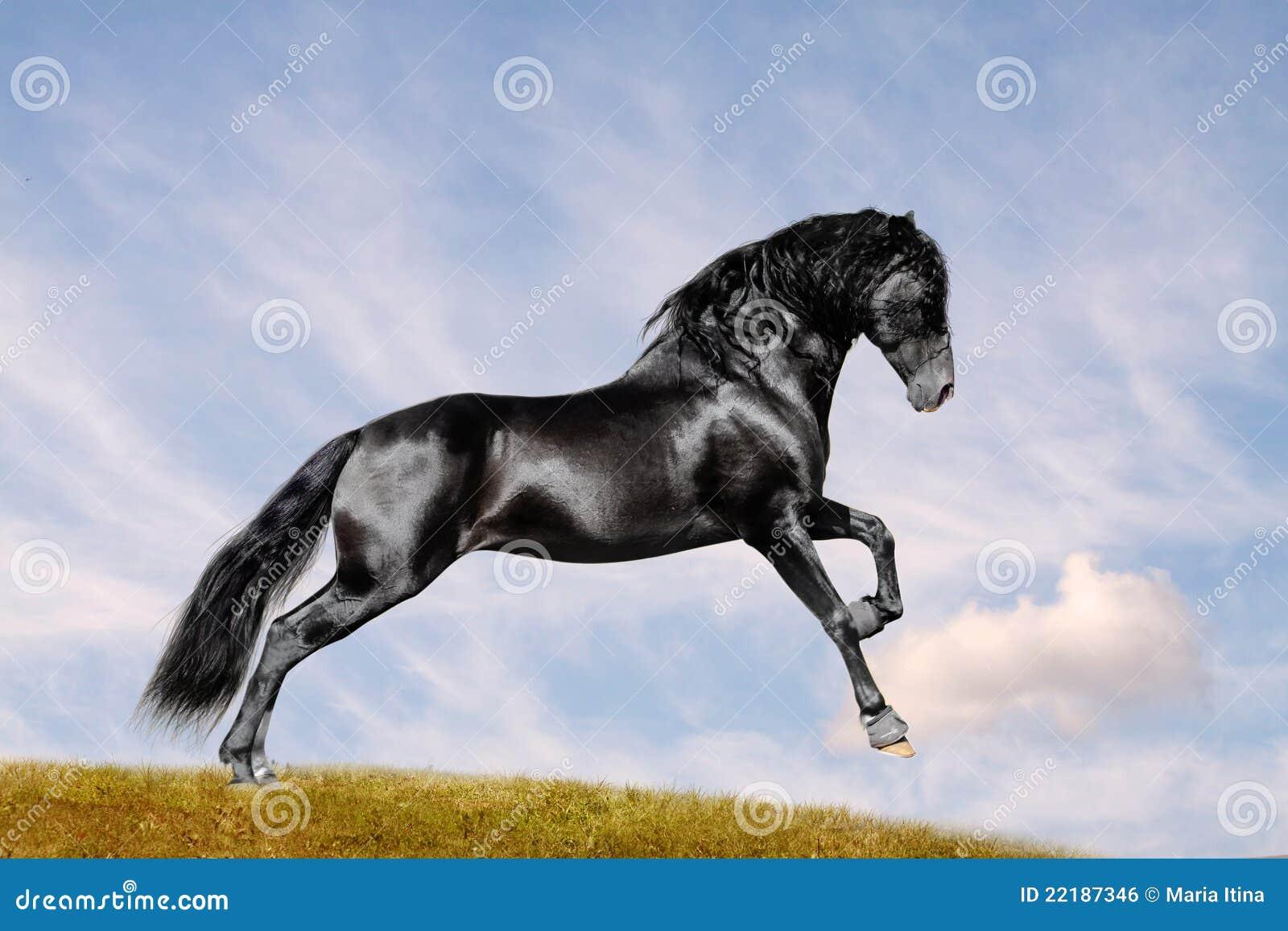 μαύρο άλογο πεδίων