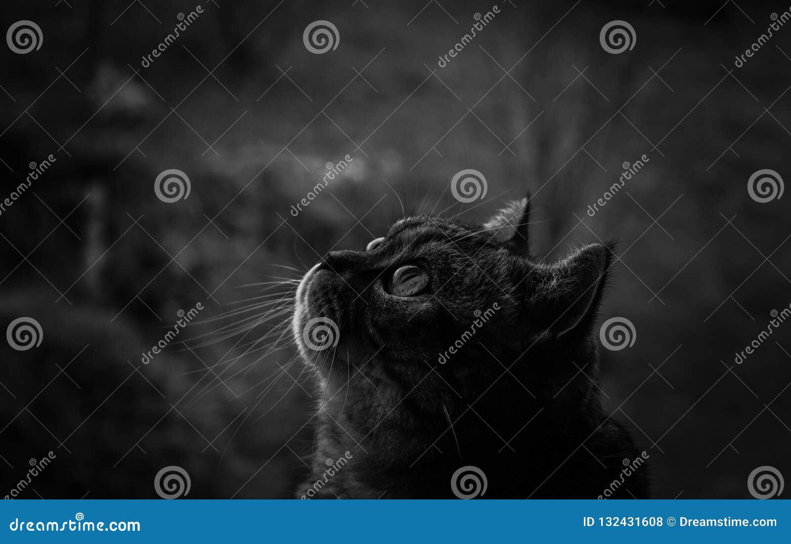 μαύρο λευκό γατών