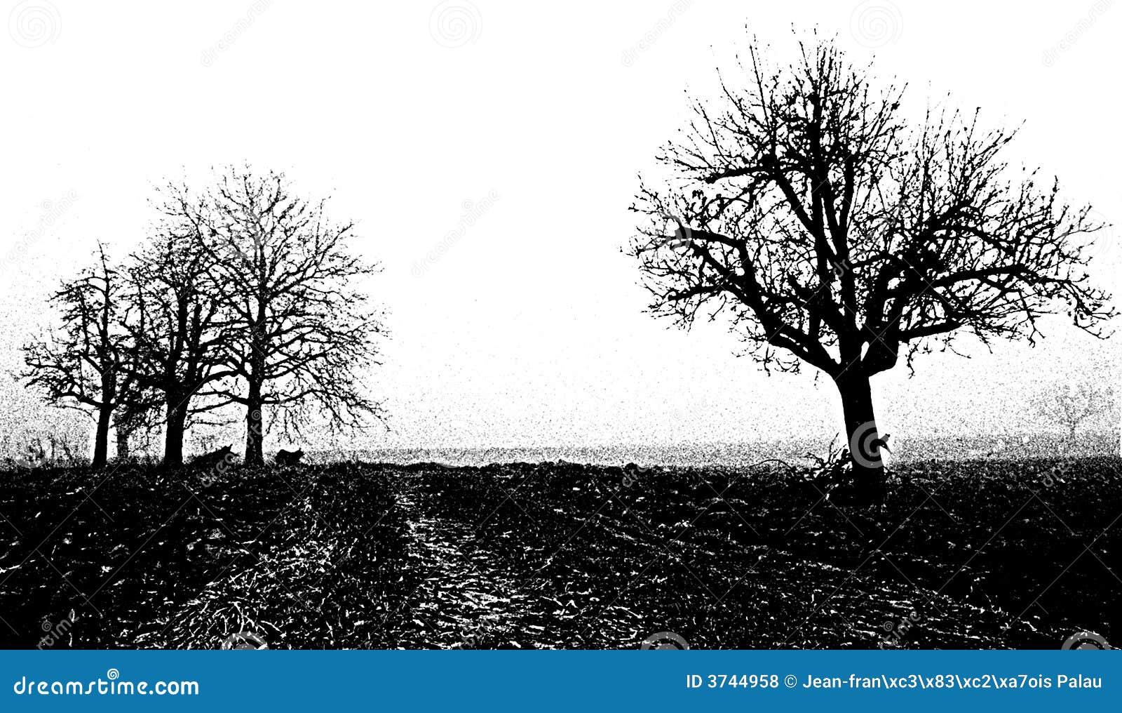 μαύρο λευκό δέντρων