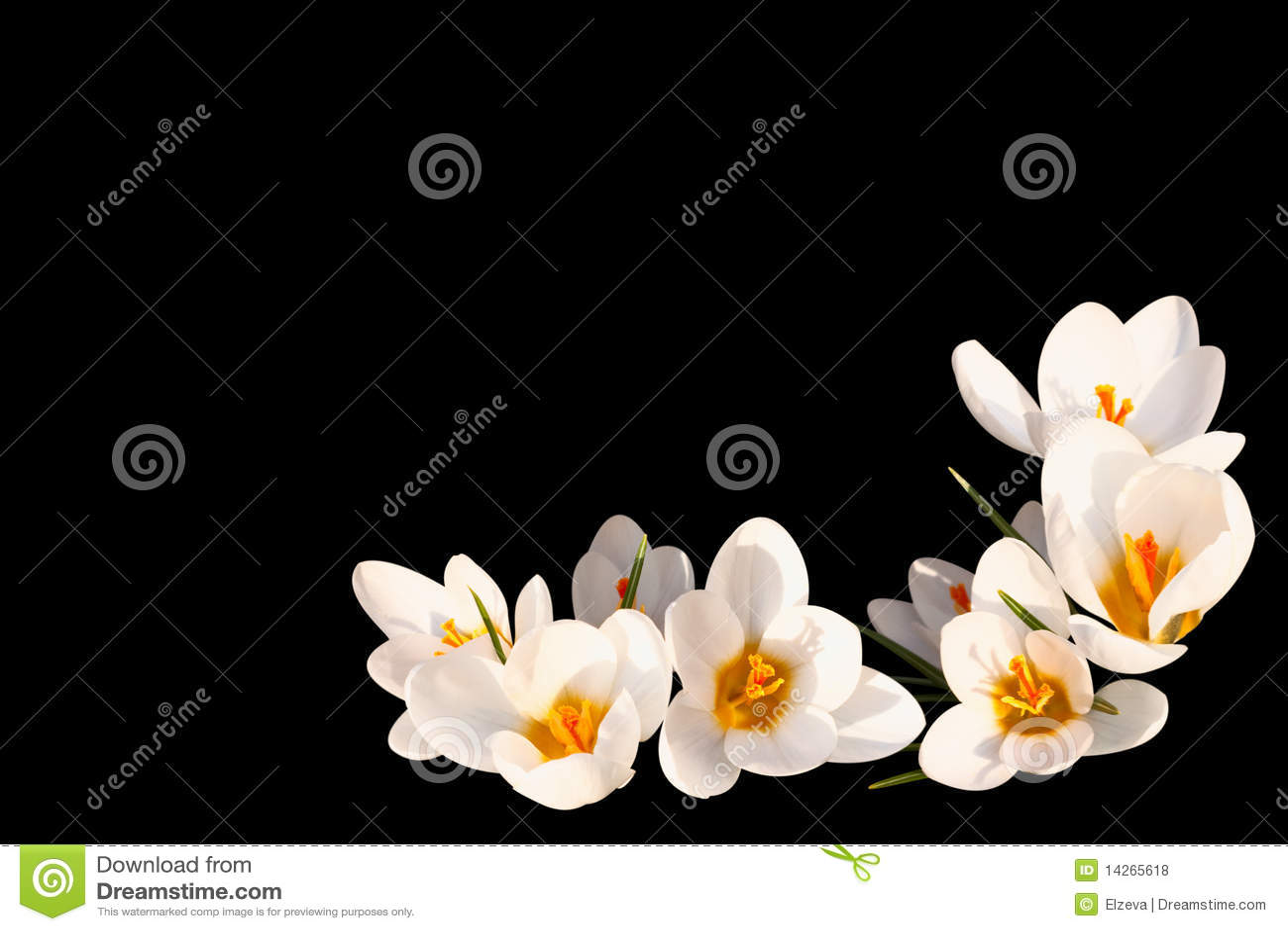 μαύρο λευκό κρόκων ανασκό&pi
