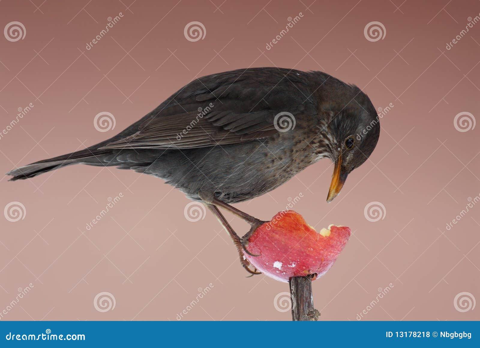 Μαύρο πουλί