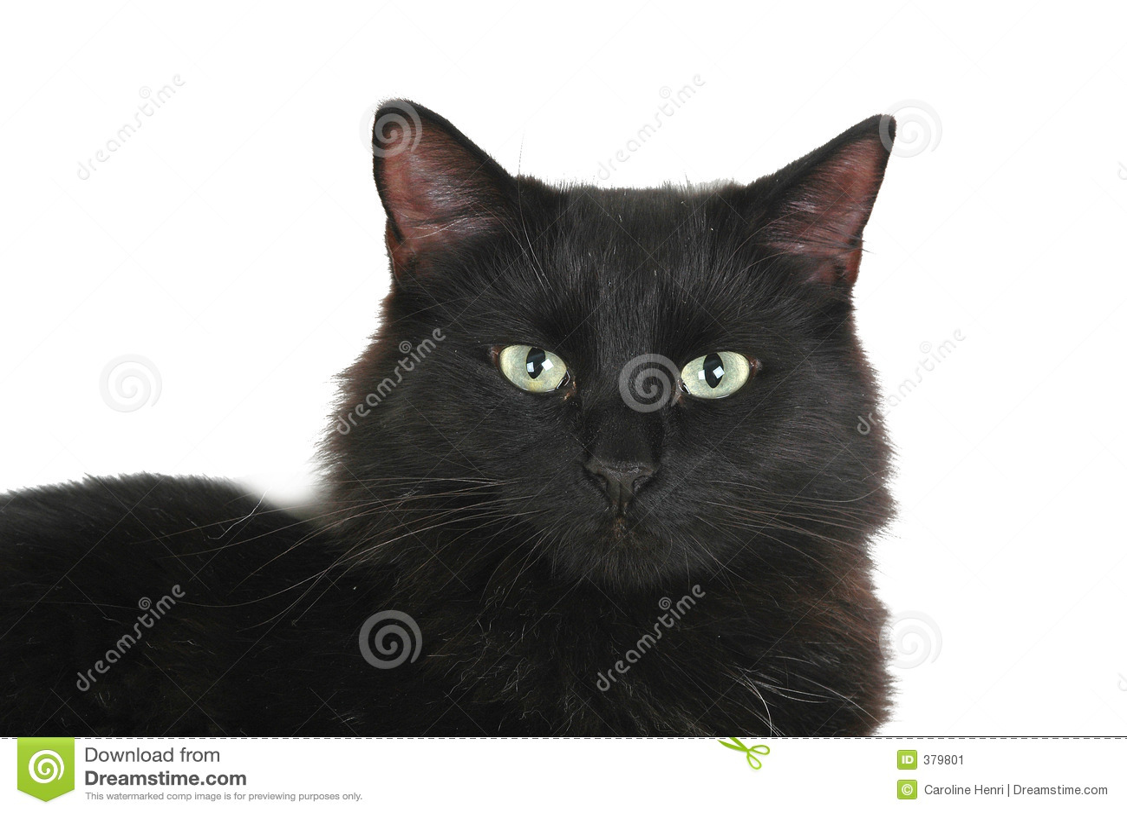 μαύρο πρόσωπο γατών